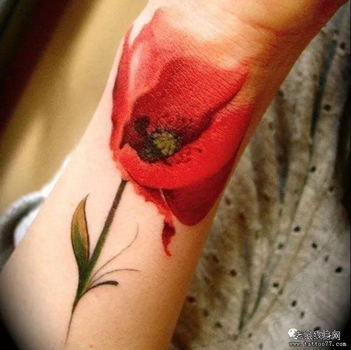 纹身素材第524期——罂粟花图案
